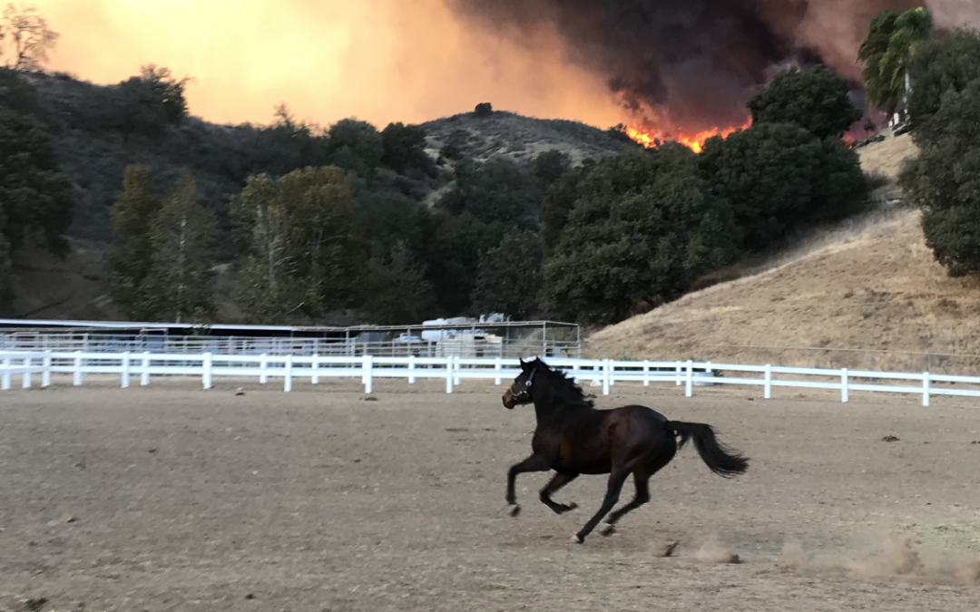 Three Lessons Learned From Wildfires